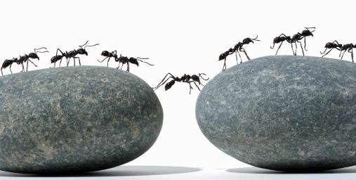 collective-intelligence-ants