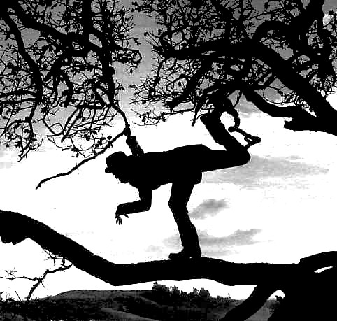 Tom Waits in a tree