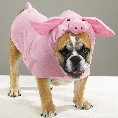 a dog wearing a pig costume